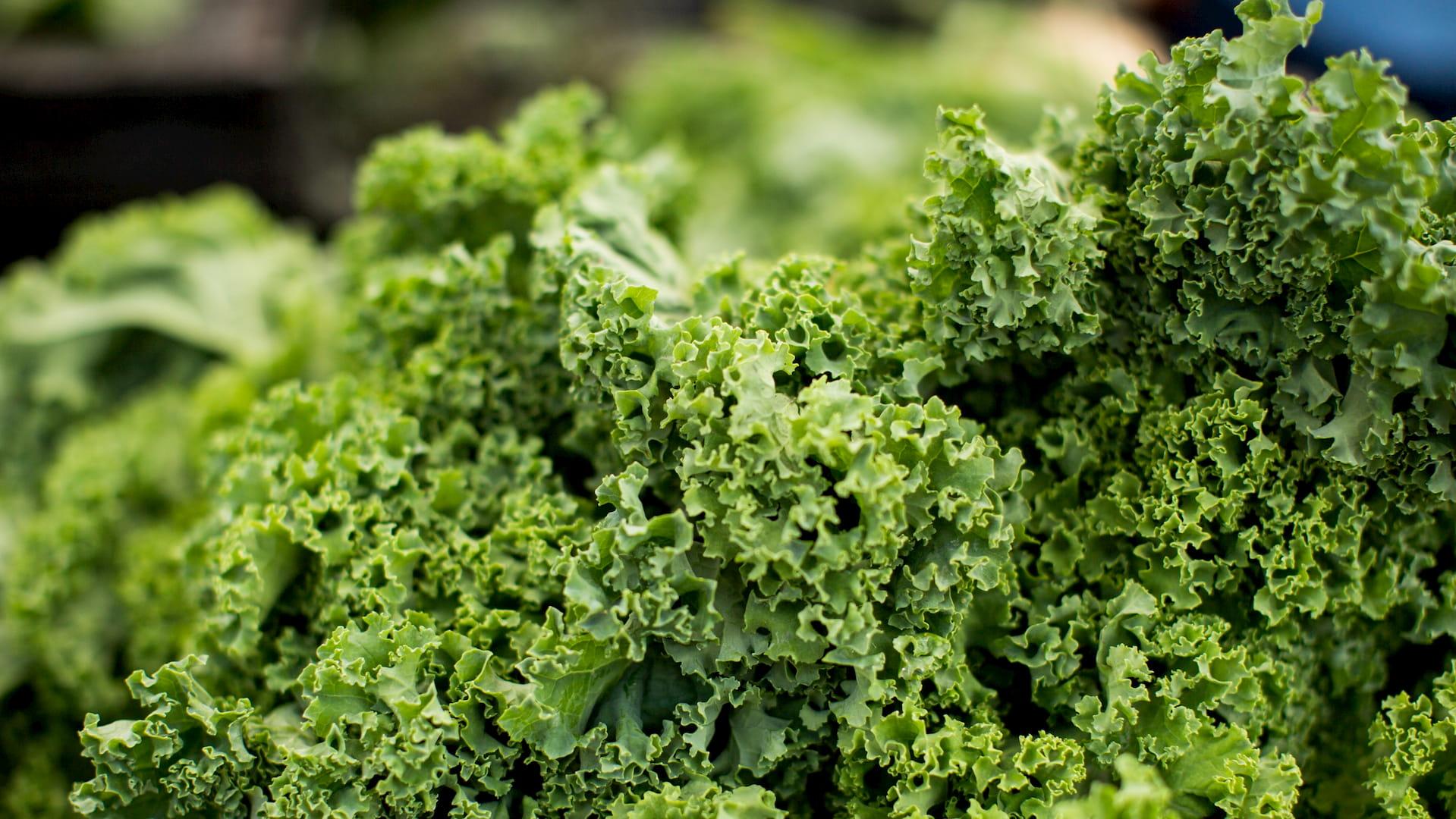 chou kale bienfaits super aliments