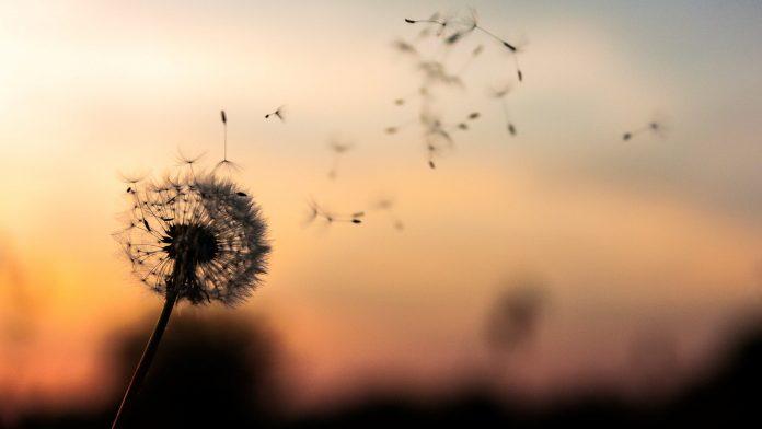 méditation pleine conscience, fleurs