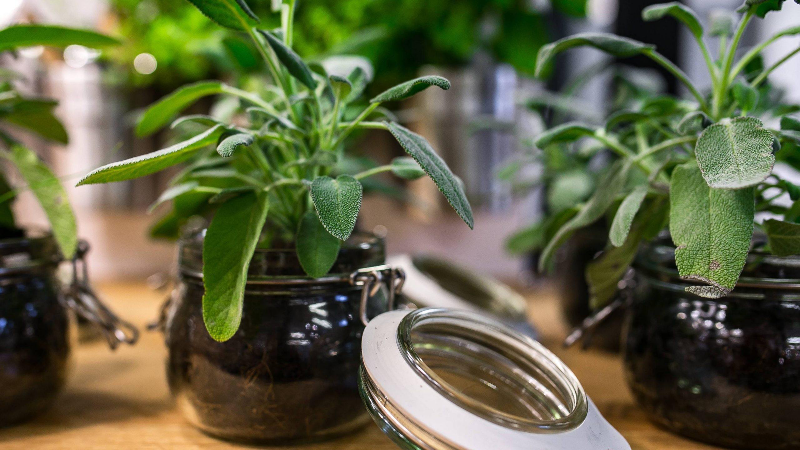 phytothérapie médecine alternative par les plantes