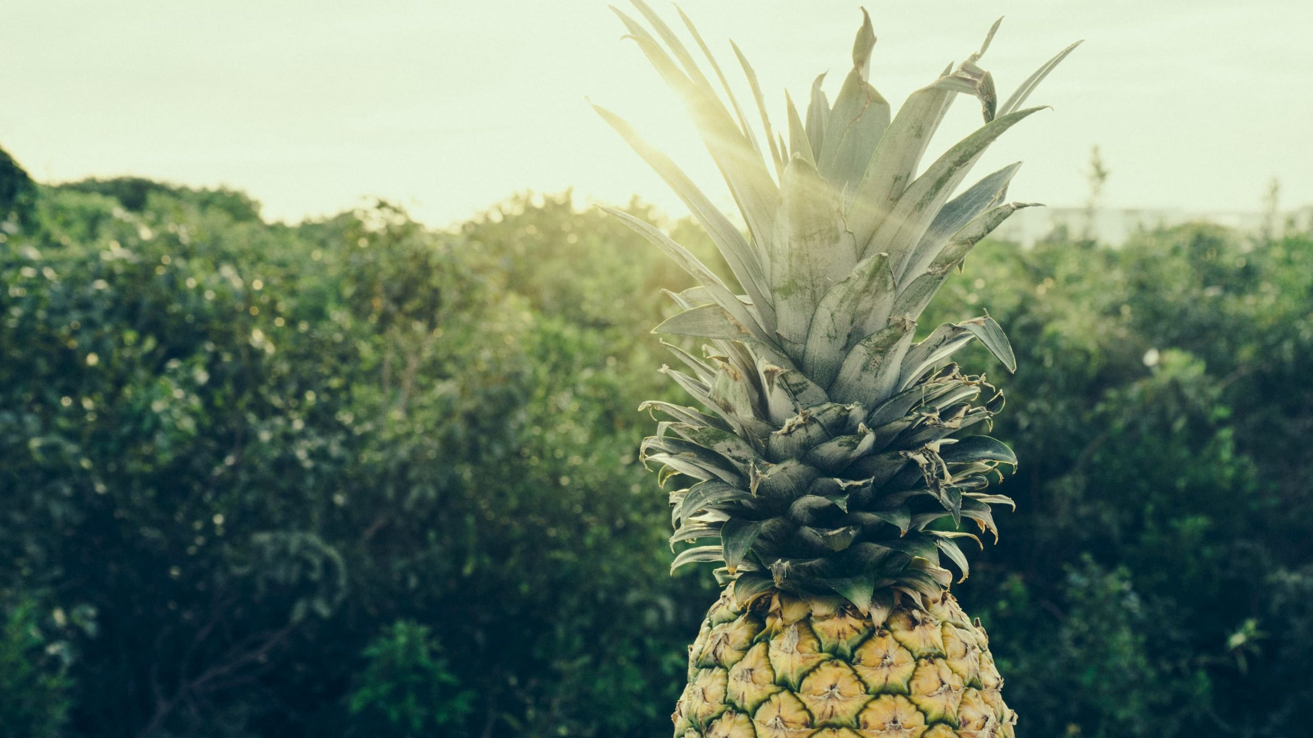 ananas au soleil super aliment